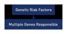 multiple genes are responsible in spina bifida