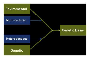 genetic basis for spina bifida