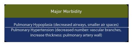 Hypoplastic lungs in CDH demonstrate a decreased number of airways