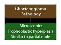High-Risk Placental Chorioangioma Pathology