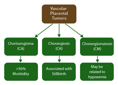 rare forms of vascular placental tumors