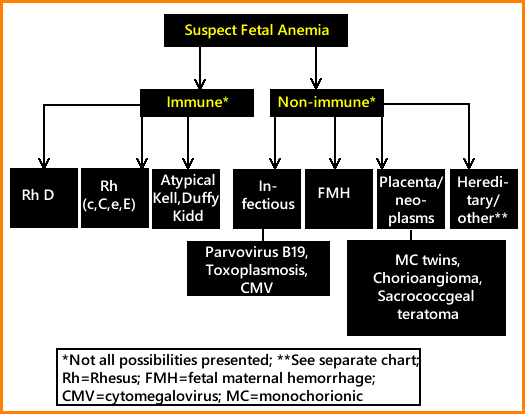 Web.cause fetal anemia-1