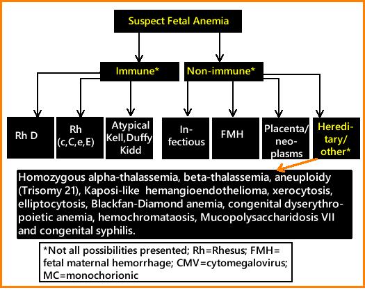 Web.hereditary.cause fetal anemia-1